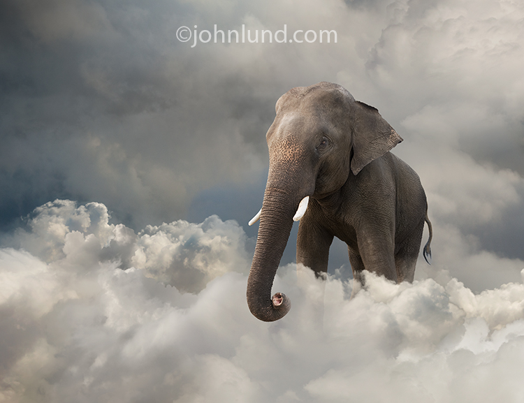 An Elephant In The Cloud Stock Photo