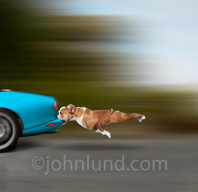 Dog CATCHES car!