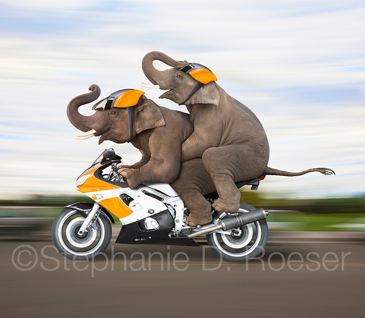 Two Elephants Riding A Motorcycle
