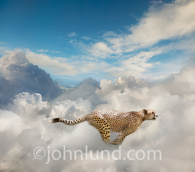 Sprinting Cheetah Photo Showing Fast Cloud Computing