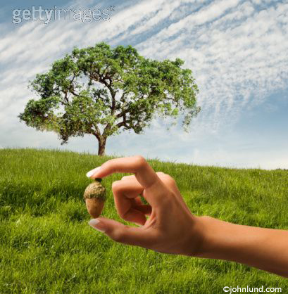 Growth: Hand Holding An Acorn Before An Oak Tree