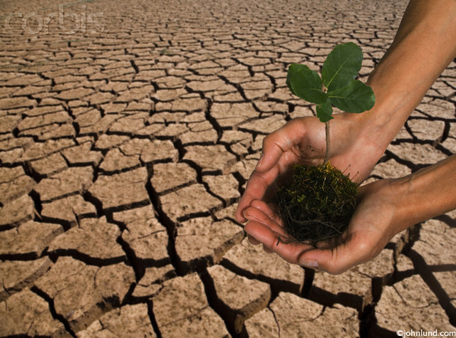 Pair of Hands Holding Seedling Over Dry Cracked Earth