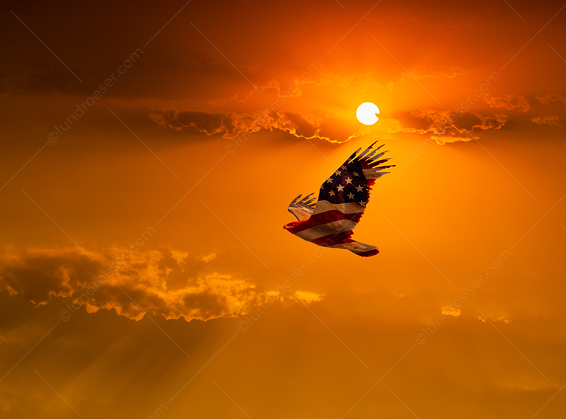 Patriotic American Eagle In Flight
