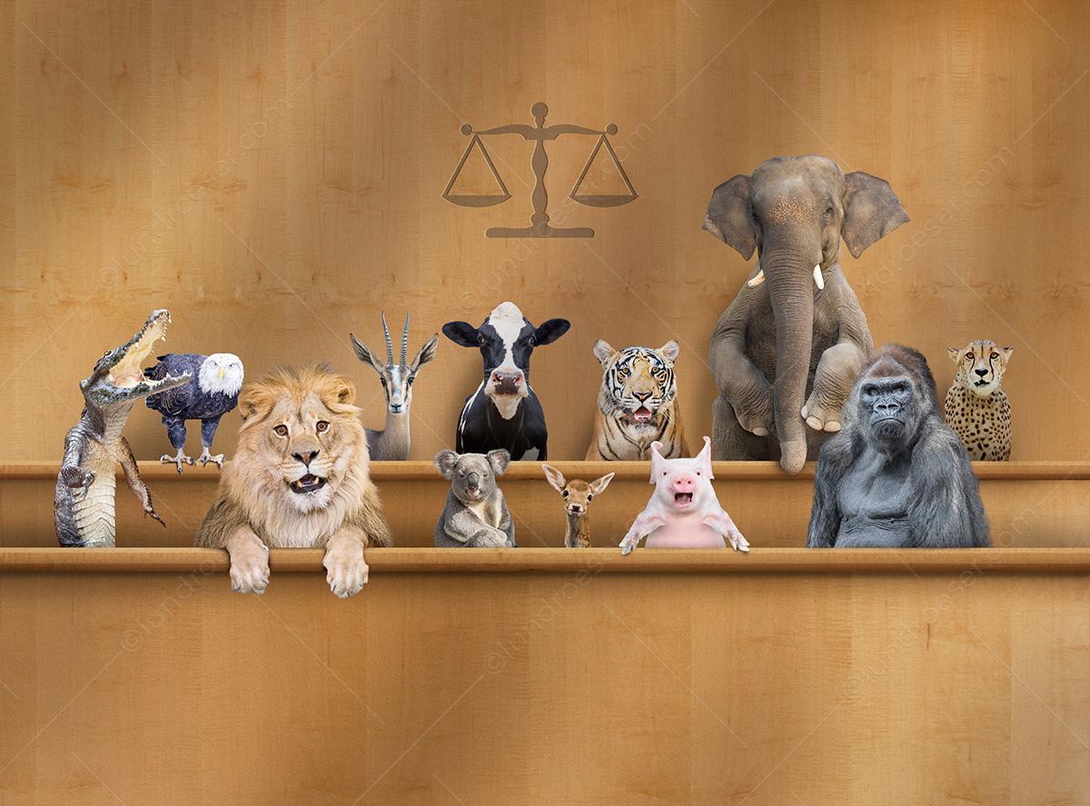 Funny_Pet_Jury_Photo