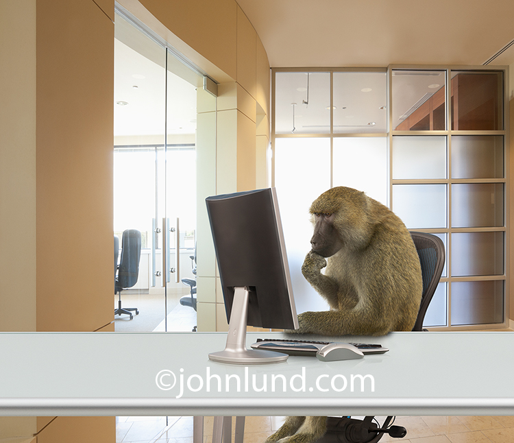 Monkey Using A Computer