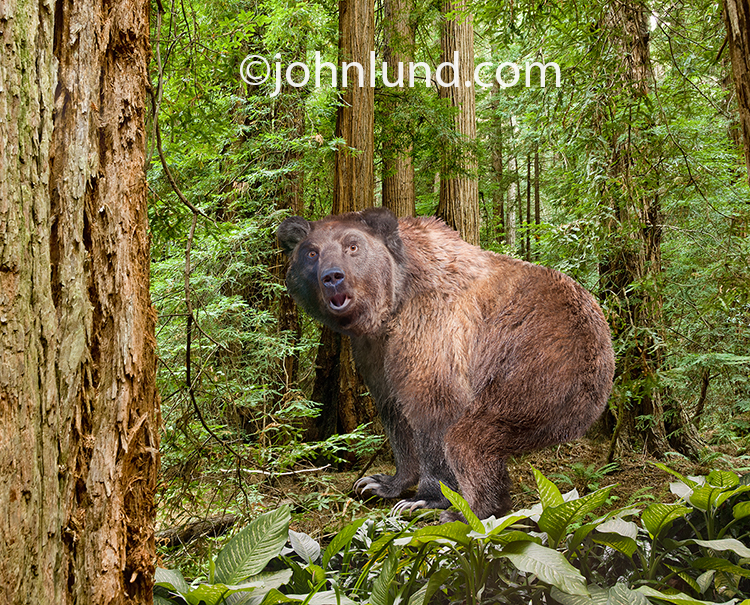 Anthropomorphic_Bear_Pooping_In_The_Woods_Outhouse