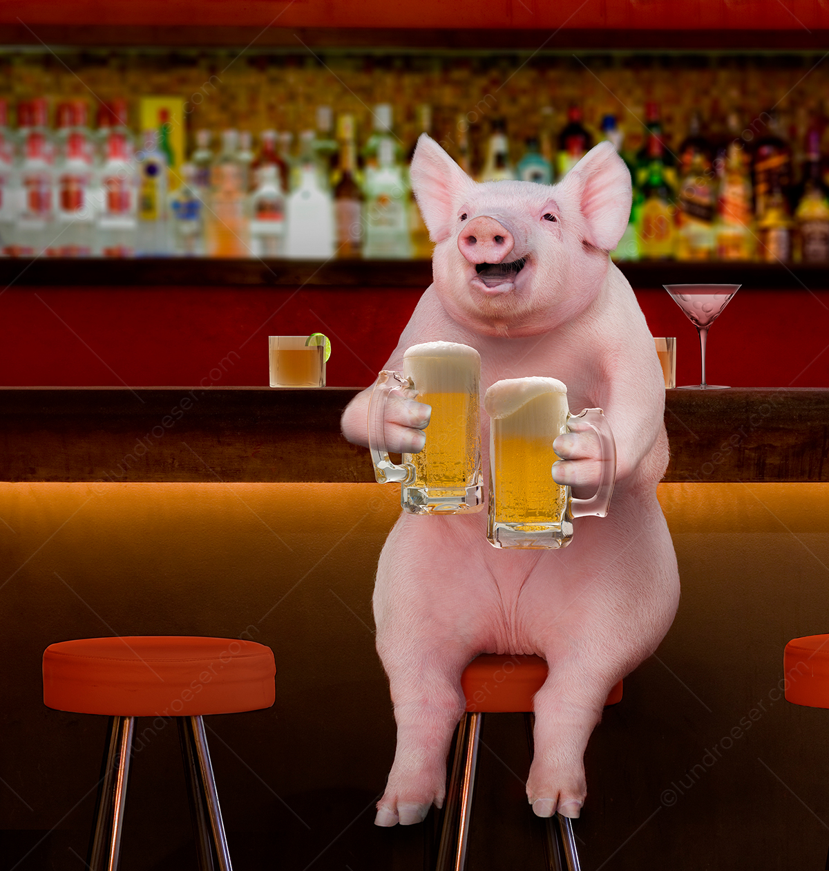 PIg_Drinking_Beer_in_A_Bar
