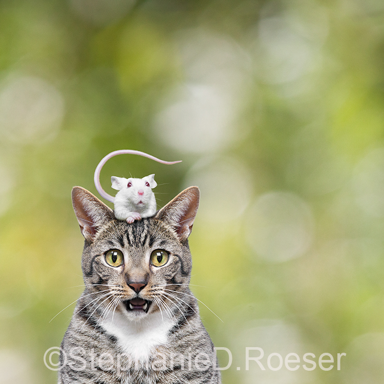 Cat And Mouse Surprise!