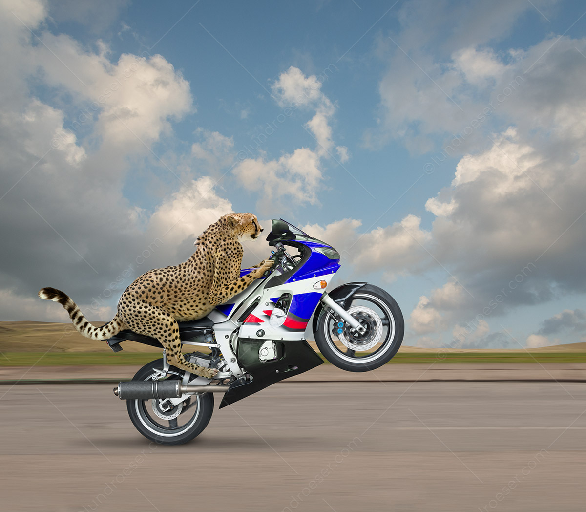 Fastest_Animal_Cheetah