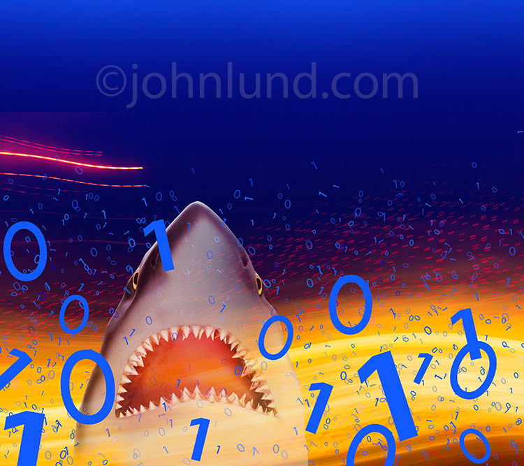 Binary Shark Computer Hacking