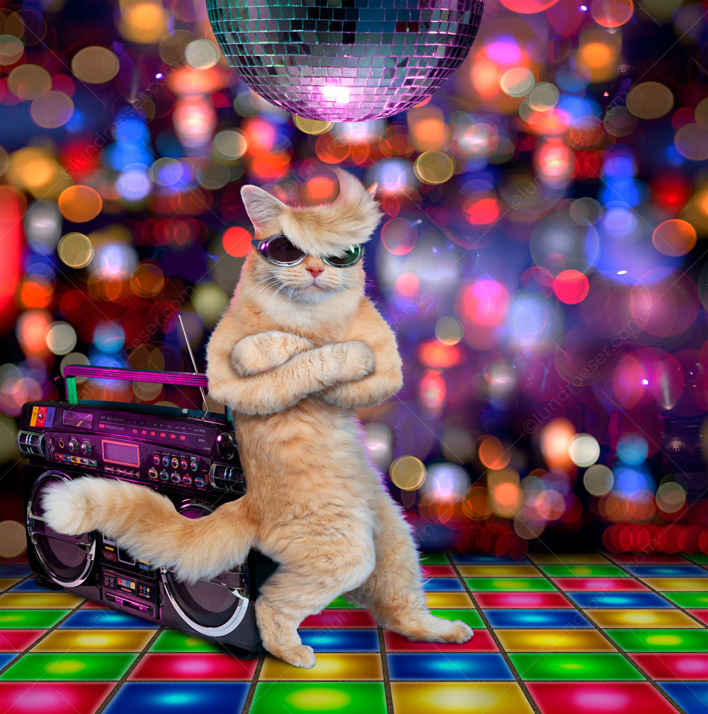 Cool_Cat_Clubbing_In_A_Funny_Greeting_Card_Photo