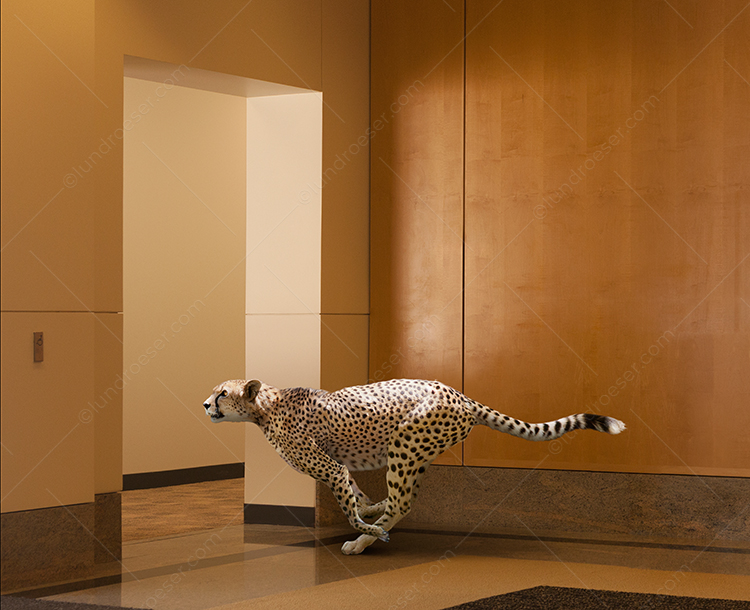 Business Speed And A Corporate Cheetah