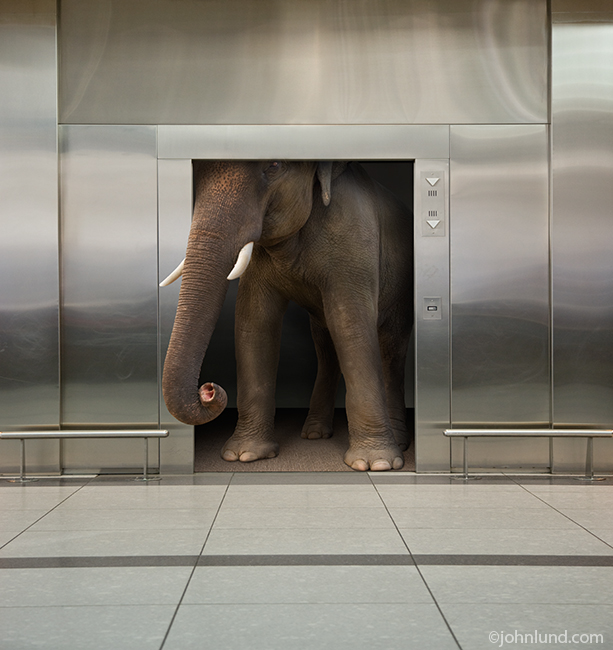 An Elephant In The Elevator