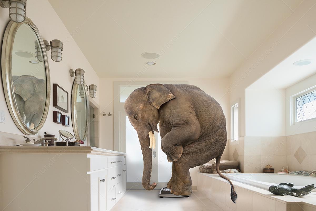 Funny_Elephant_On_A_Bathroom_Scale