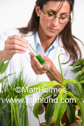 Female scientist injecting syringe into plant