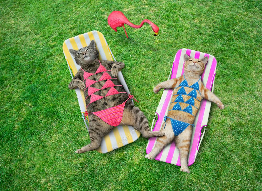 Funny_Cats_In_Bikinis