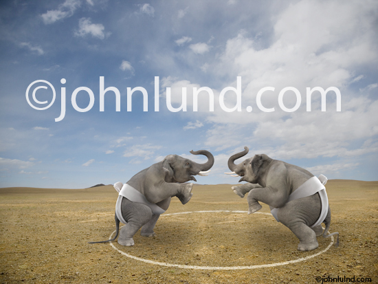 Elephant Photos Funny LOL Pictures of Two Elephanst Sumo Wrestling
