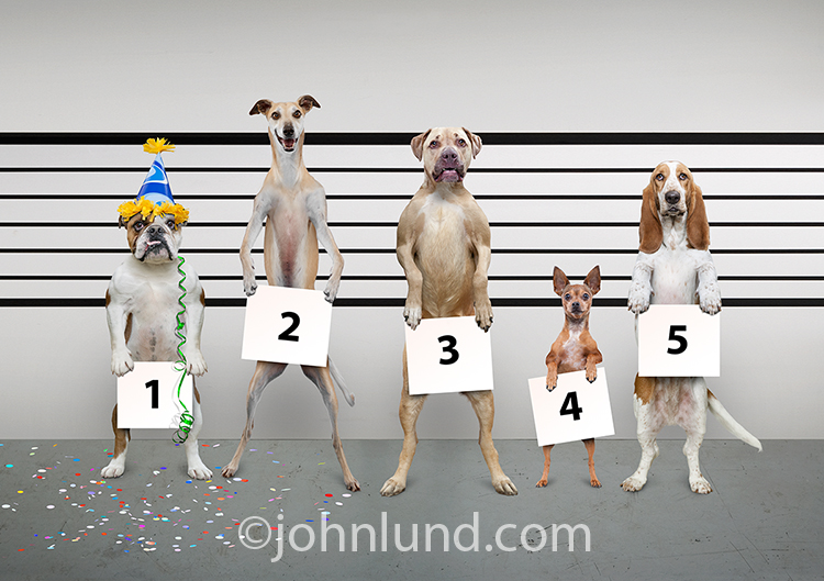 Funny Police Lineup Party Dog