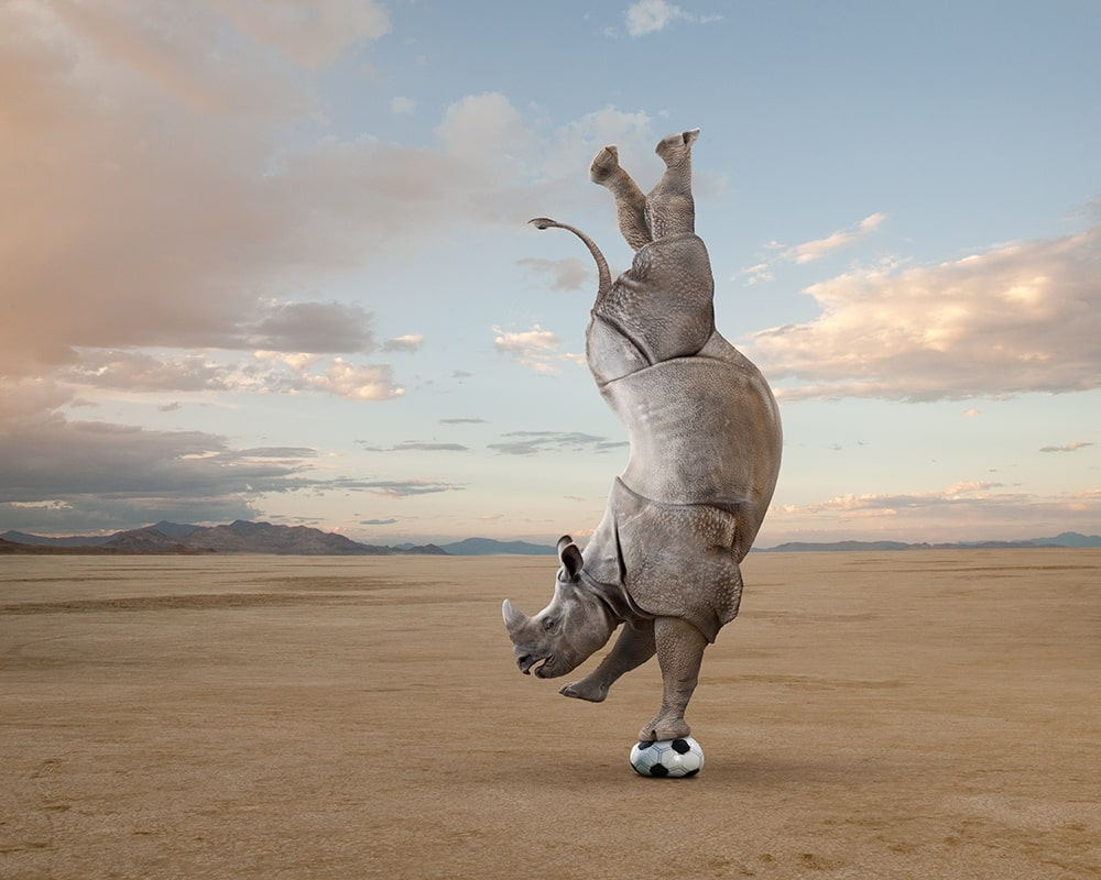 A rhinoceros performs a handstand on a soccer ball in a funny stock photo.