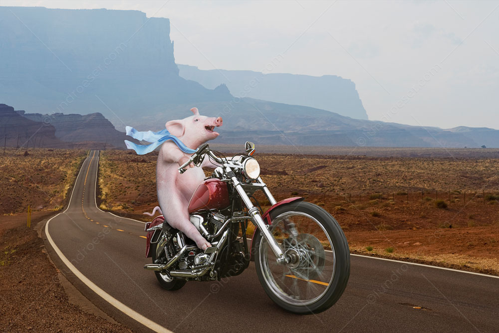 Funny_Hog_On_A_Harley