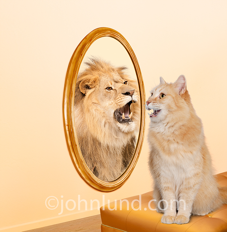 Cat With Lion In The Mirror