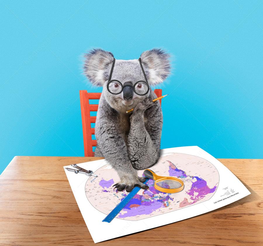 Funny_Koala_Bear_Travel_Planning