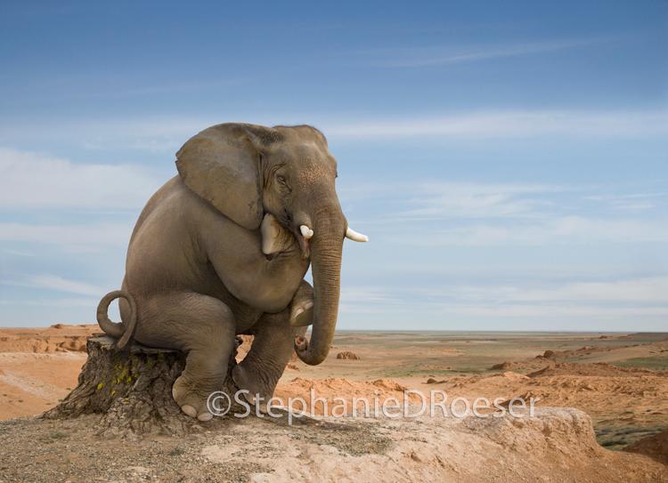 Elephant_Thinker:_An_Elephant_Sitting_in_Rodin's_Thinker_Pose.
