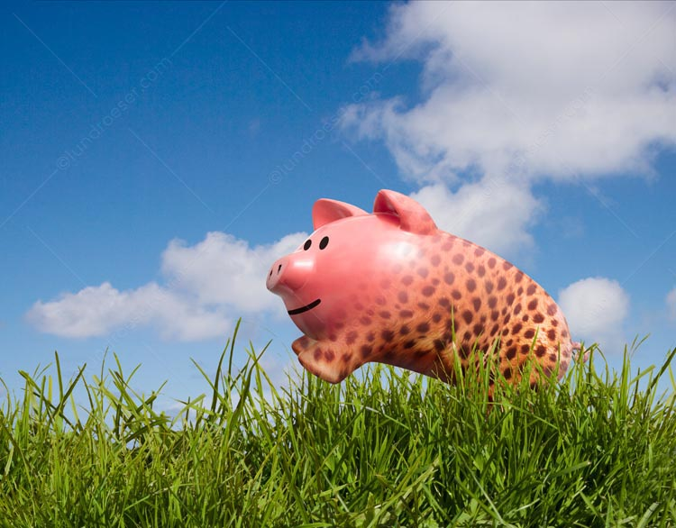 Piggy Bank Cheetah