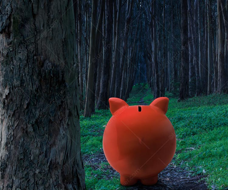 Piggy Bank Forest