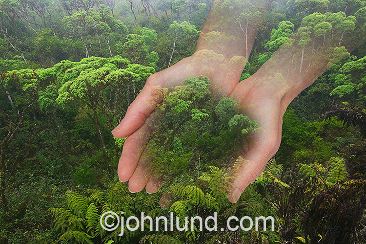 Rainforest Cradled In Hands