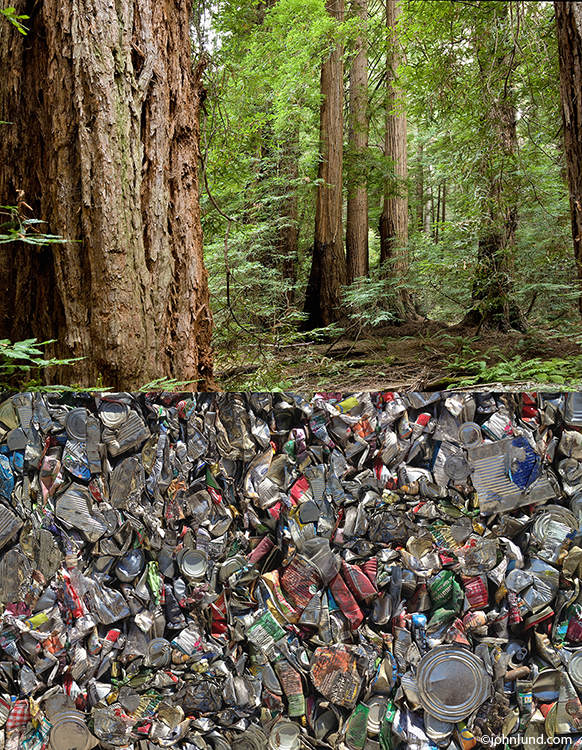 Recycled Can Forest