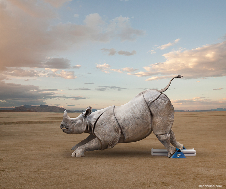 Funny Rhinoceros Pictures-Rhino In The Starting Blocks