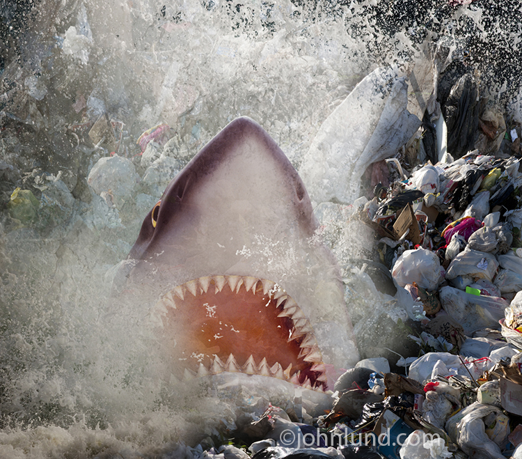 Shark In Plastic Pollution