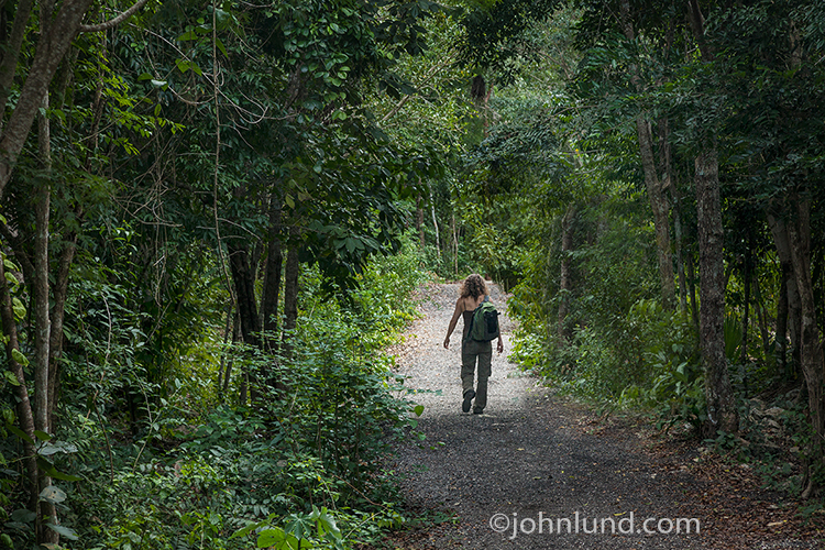 Strong Woman Hiking In Jungle