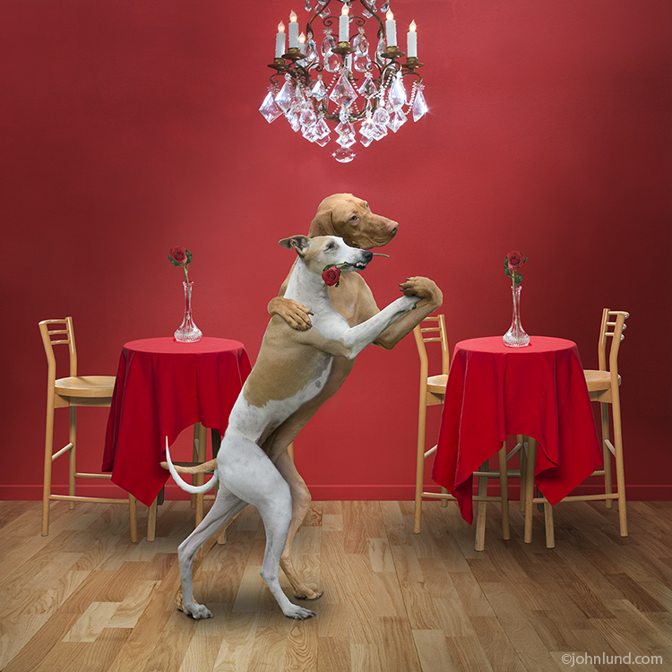 Tango Dancing Dogs For Greeting Cards