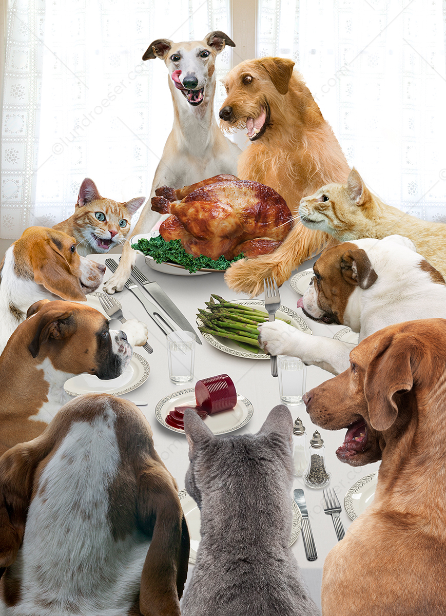 Thanksgiving_Dinner_With_Cats_And_Dogs