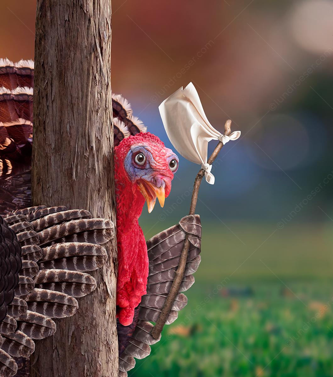 Funny_Thanksgiving_Turkey_Surrendering