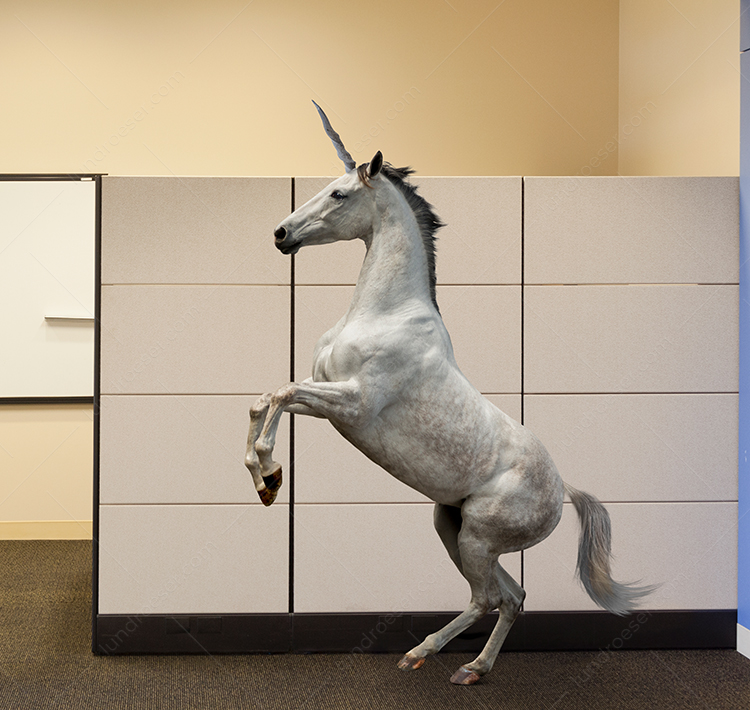 Unicorn In The Office