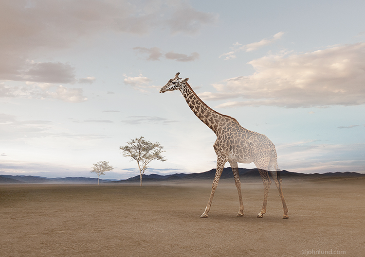 Vanishing Giraffe