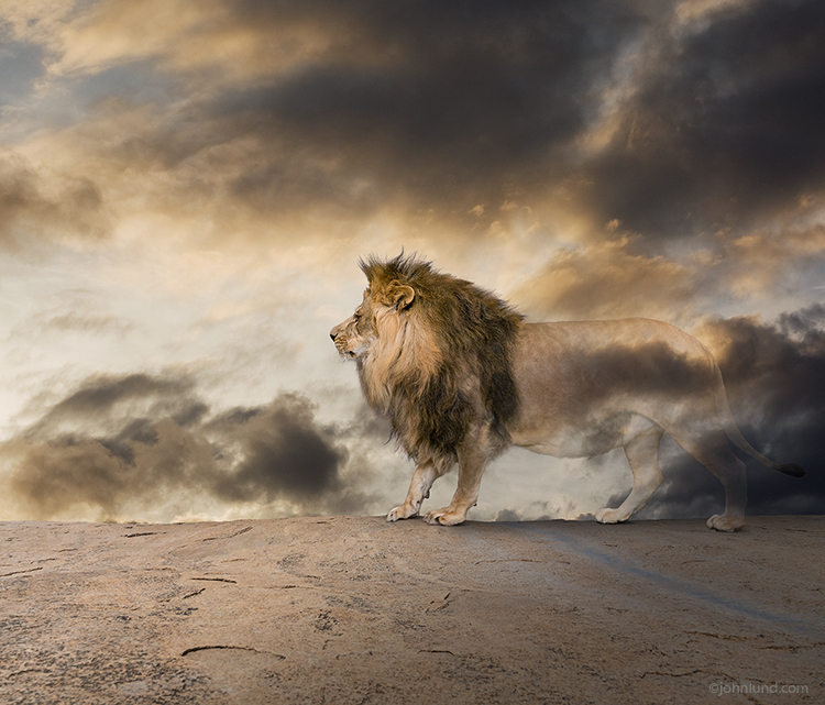Vanishing Lion