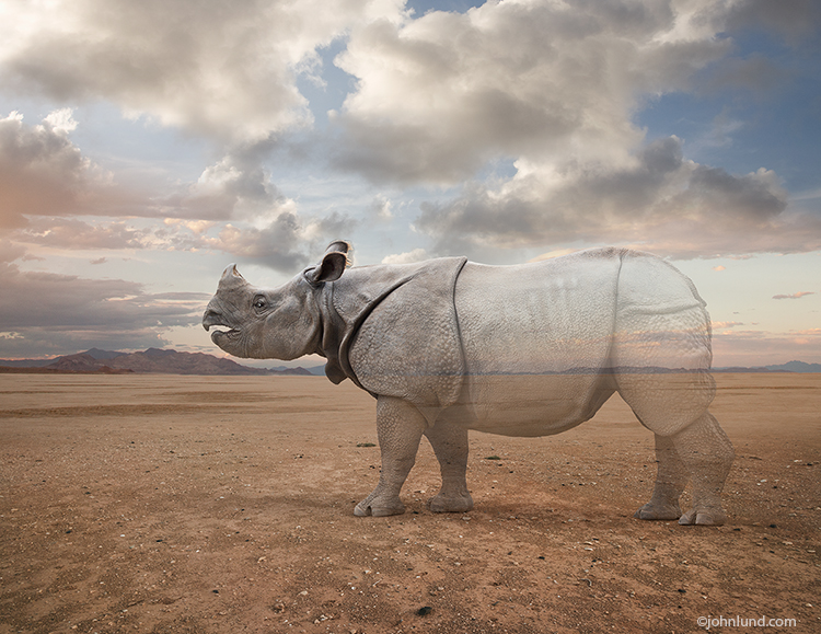 Vanishing Rhino