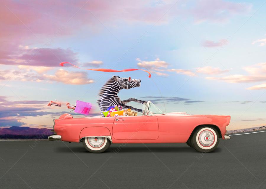 Zebra_Driving_A_Car