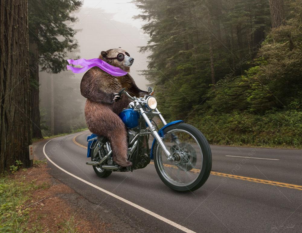Bear_Riding_Motorcycle