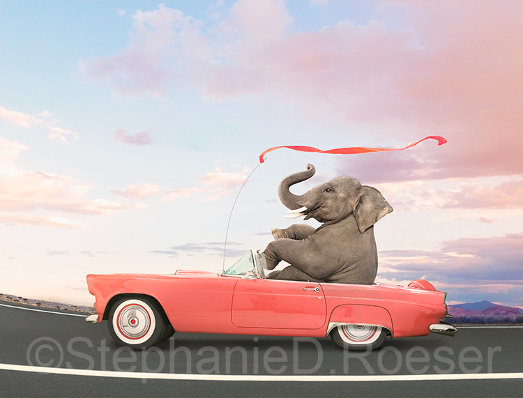 Funny Elephant Driving A Convertible