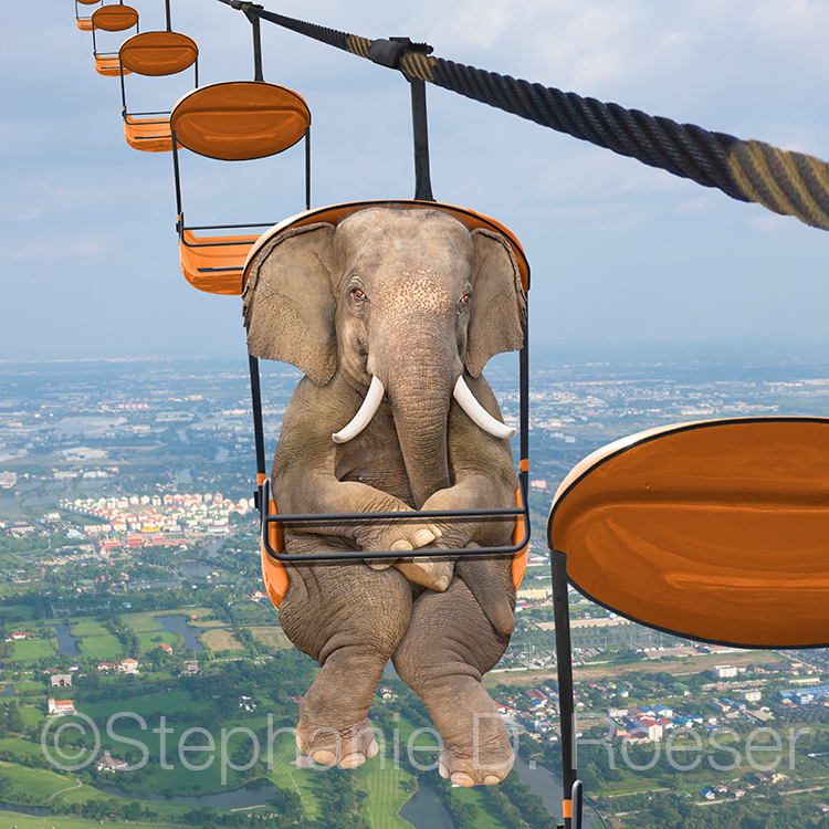 Elephant Squeezed Into A Skyride