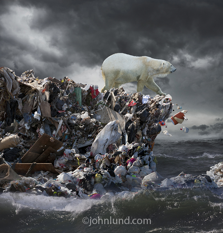 Polar Bear Pollution