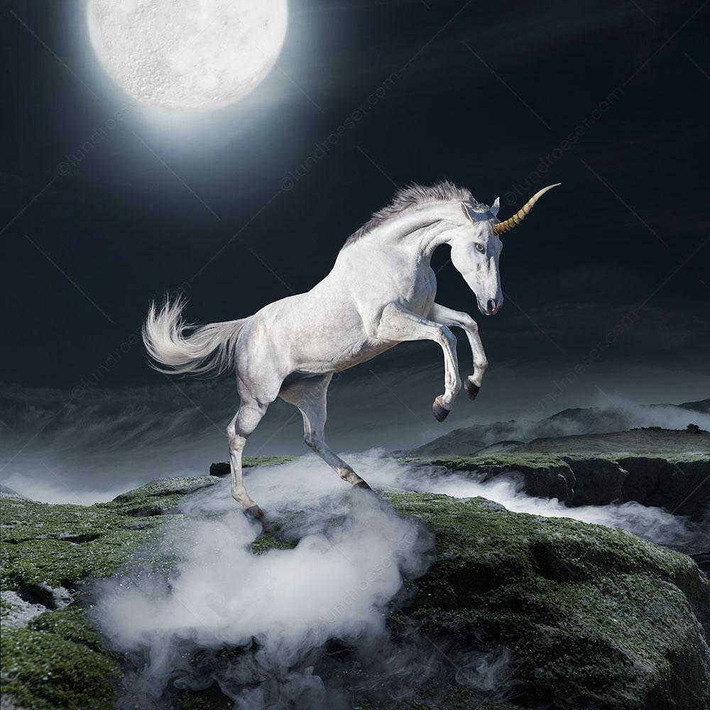 Unicorn_Photo